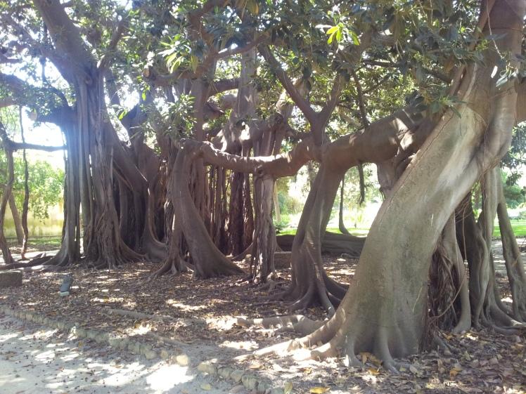 albero 2